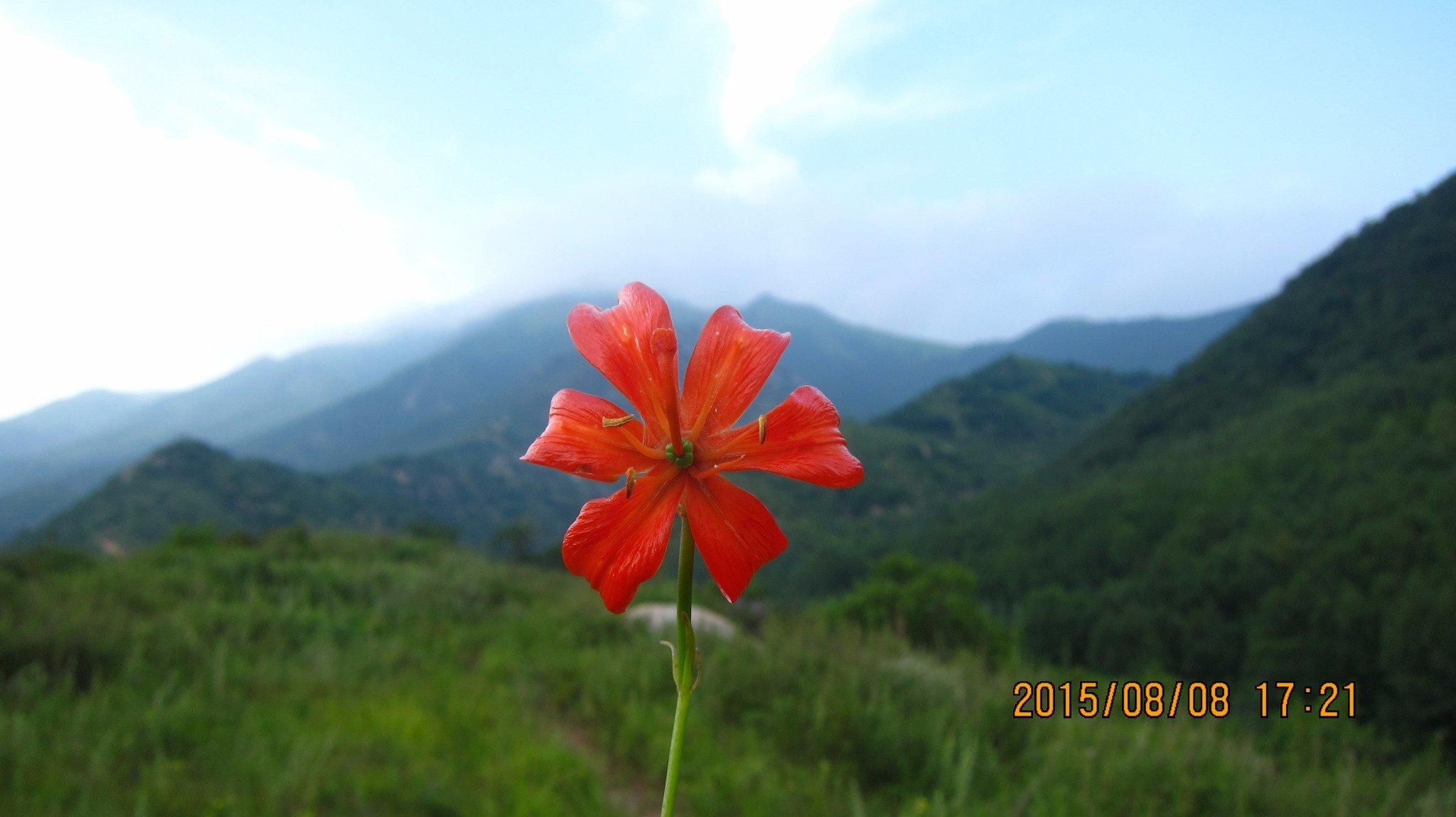 """带您认识八月东灵山的花-那可是京西的""""珠穆朗玛""""北京第一海拔高峰"""