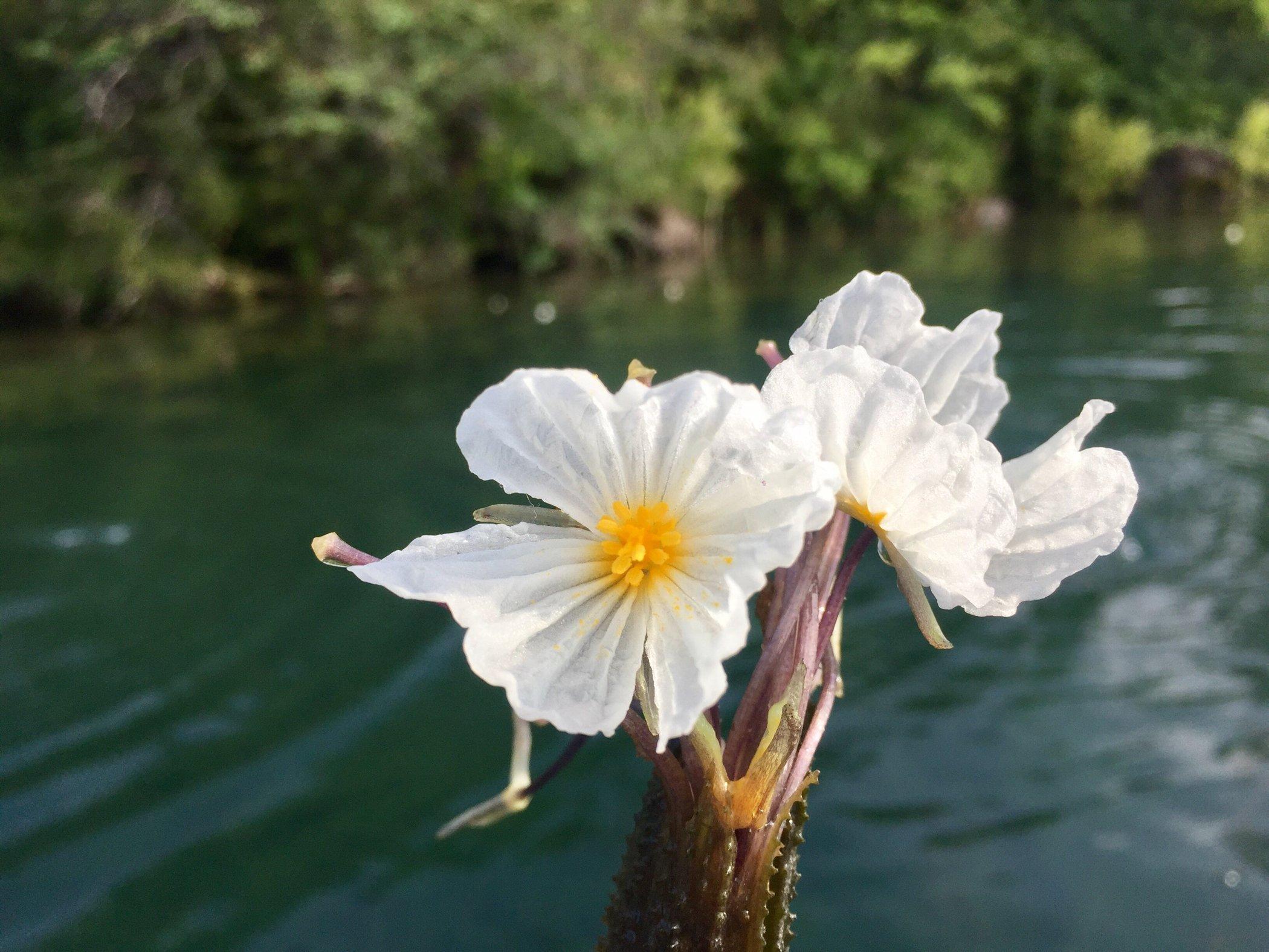 水性杨花的意思_真容难觅里格花园半岛客栈水中花,她叫水性杨花雾里看花水性杨花,漂亮