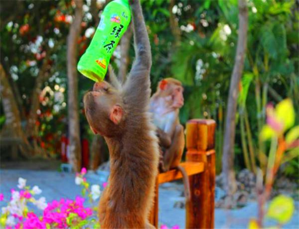 在去景区游玩的时候带的零食或者矿泉水瓶子什么的记得随手丢垃圾桶里