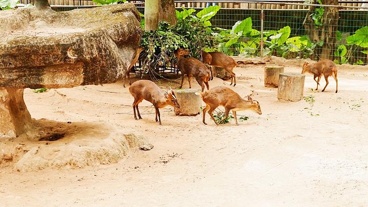 来动物园最爱的还是长颈鹿了,可惜园区每天有固定的喂食时间,刚好错过了,长颈鹿温顺又可爱,喂这么一个庞然大物,记得小时候最喜欢去动物园看长颈鹿。 不得不说,这家动物园真的是高性价比的地方,门票便宜,虽然动物比不上长隆,但是该有的都有了,适合社区大爷大妈周末带着孩子来这里玩玩,毕竟让孩子还能在城市中感受自然,能与动物互动的只有动物园了。