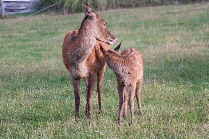 新西兰珍稀动物