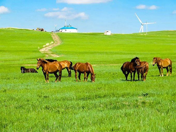 海拉尔-金帐汗蒙古部落-横穿草原-额尔古纳图片