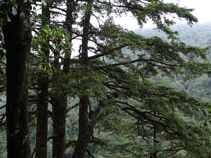 金秀银杉森林公园,茶山瑶瑶寨六段屯图片