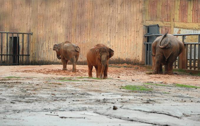 门票:香市动物园的门票价格为成人票100元/人。1.2米(不含)以下儿童免费,1.2米(含)-1.5米(含)按50元/人收费,65周岁以上老人凭有效证件票价为30元/人。 开园时间:9:30—17:00(节假日9:00开门),清园时间:17:40 表演节目1:大象表演 熊猴表演 杂技表演 时间:周一至周五 10:40、15:00 节假日 10:40、12:30、14:30、16:30 地点:综合表演场 表演节目2: 海洋动物表演 鸟艺表演 时间:周一至周五 10:40、15:00 节假日 10