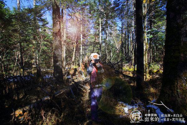 长白山地下森林图片