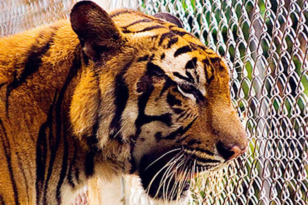 苏梅岛水族馆和老虎动物园