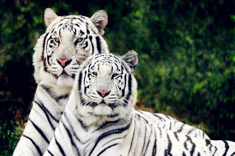 三峡森林动物园