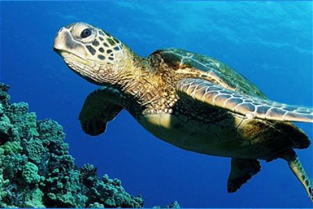 展示的海洋动物品种… 开封东京极地海洋馆的主要展区有极地馆,科普馆
