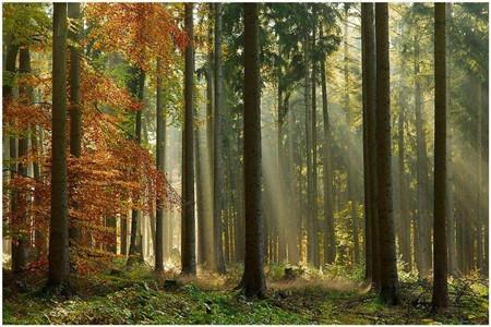 森林里有许多耐寒的柏树,还有云杉和漂亮的蓝杉.