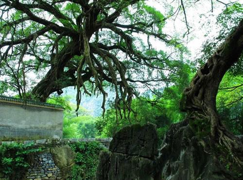 """佐龙桥和佐龙祠,配上龙爪榕可称为""""千年古树万年亭"""",是当年"""