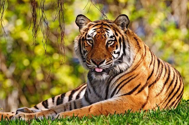 穿老虎的可爱的人