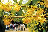 西湖国际桂花节