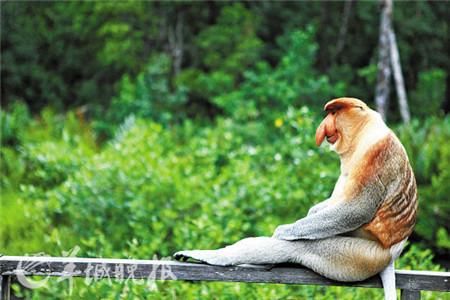 这里热带雨林的环境得天独厚,有着世界上珍稀的鸟类物种,并且鸟类