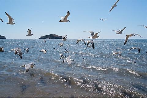 金石滩海钓喂海鸥