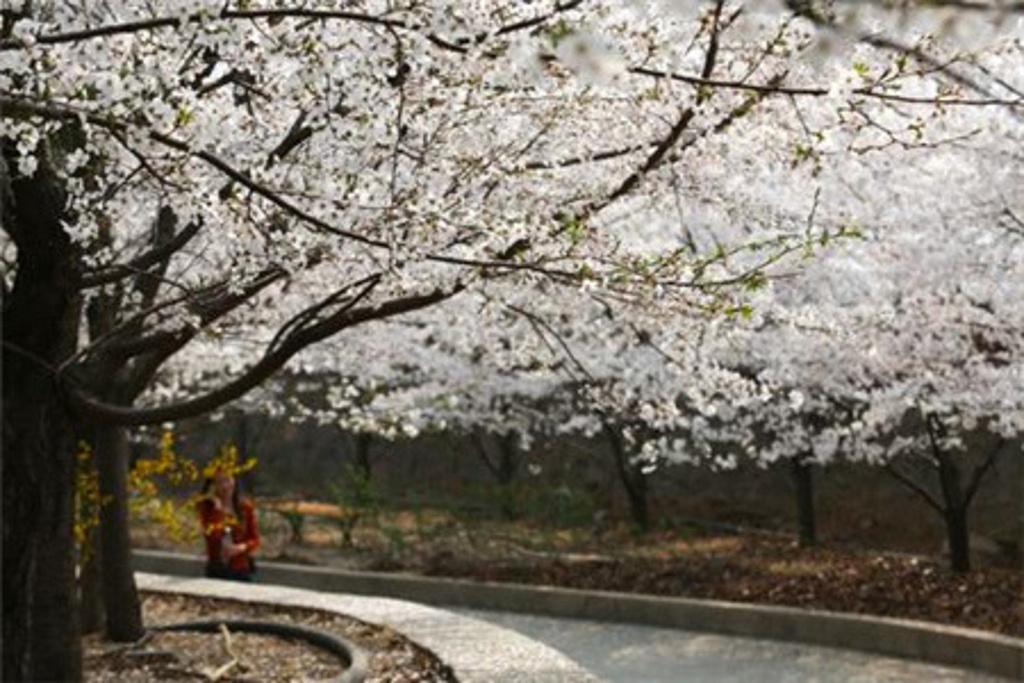 2015樱花山风景区_旅游攻略