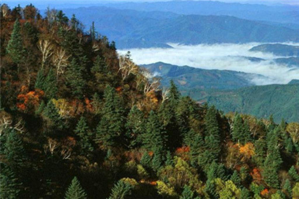 老秃顶上森林植物群落垂直分布特征明显