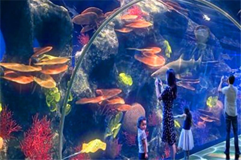 海滨城浩海立方海洋馆Blendoku中等118攻略关图片