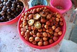 豆蔻 Nutmeg
