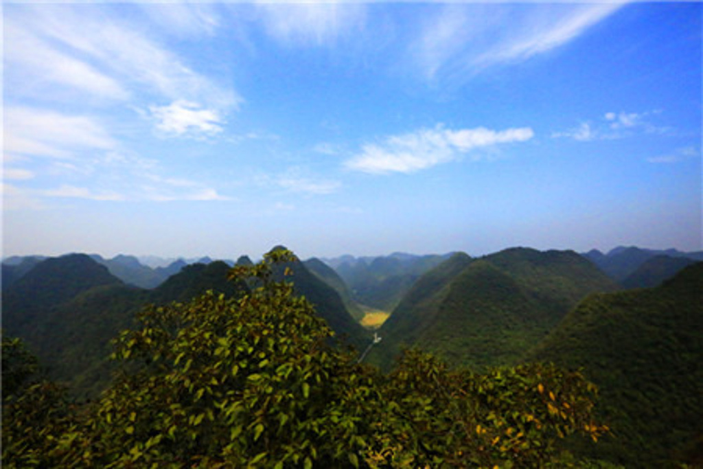 石上森林图片