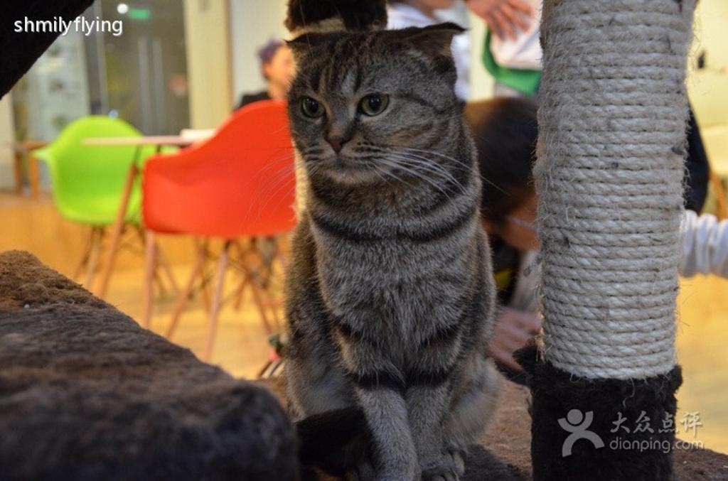史上最可爱的茶杯猫