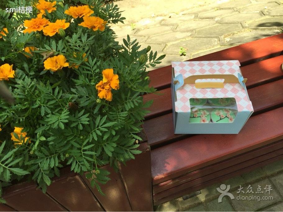 手绘盆栽植物图片