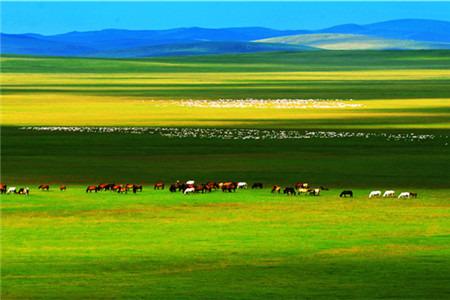 乌拉盖草原旅游攻略