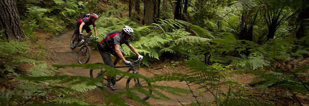 ps:需要注意的是,在新西兰骑自行车需要佩戴头盔,路边会有自行车道