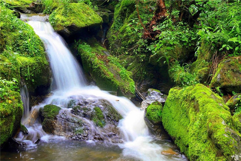夏天树林风景图片