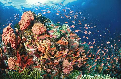 图巴塔哈群礁海洋公园