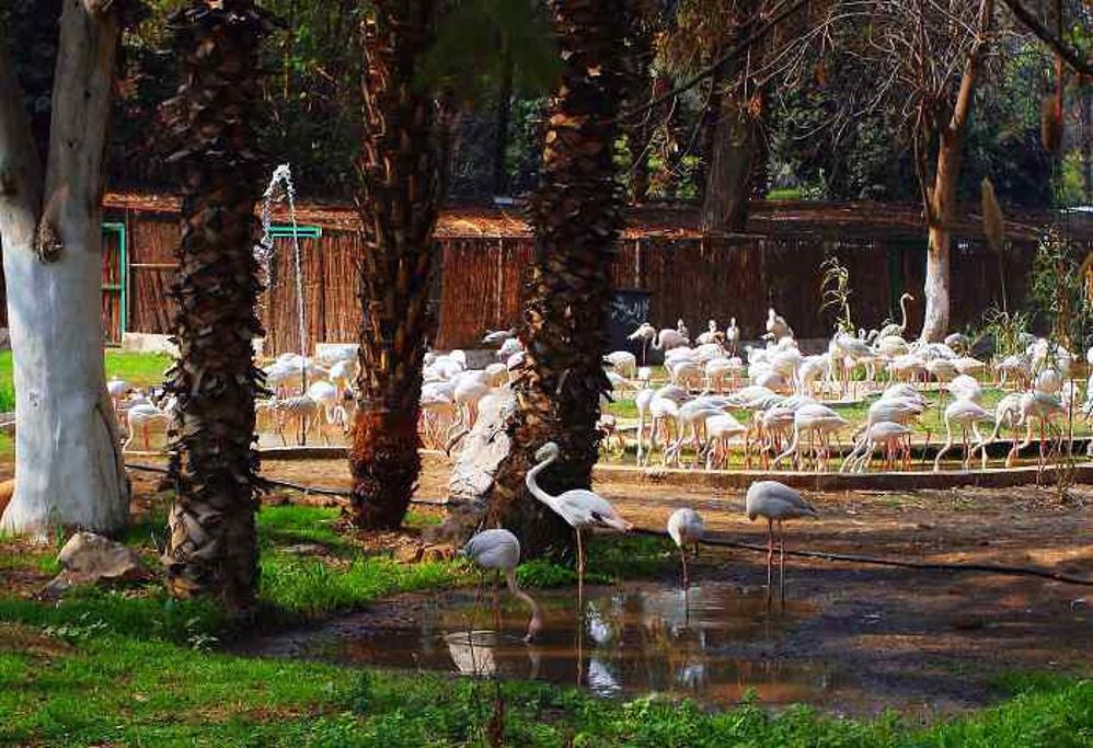开罗动物园giza zoo