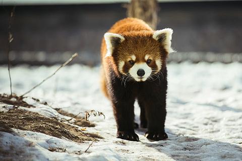 真实可爱动物图片