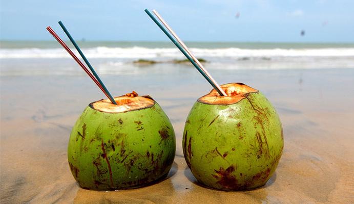椰子内部结构图