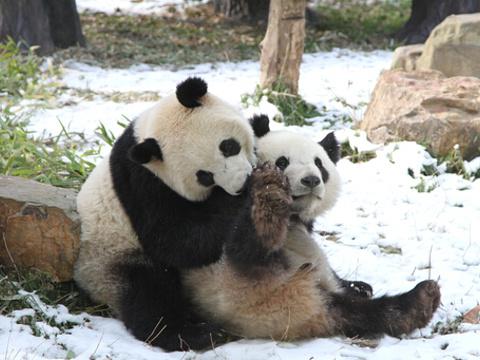 红山森林动物园大熊猫馆