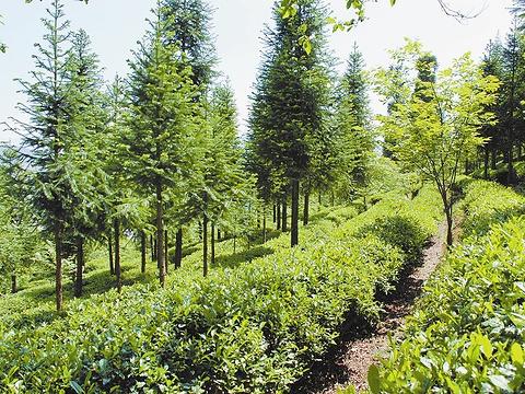 经济林木示范区