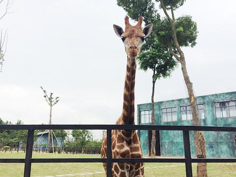 淮安动物园