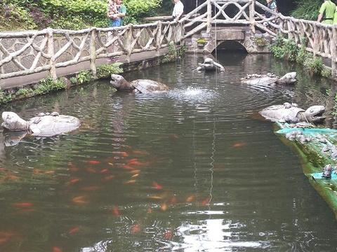 沅江旅游景点图片