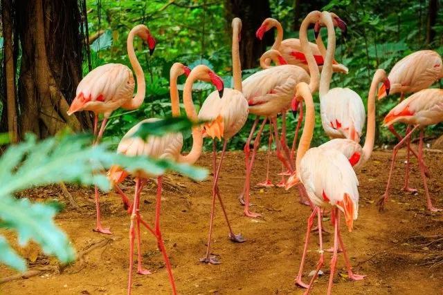 长隆野生动物世界是目前国内最大的原生态动物园,拥有的珍稀濒危动物