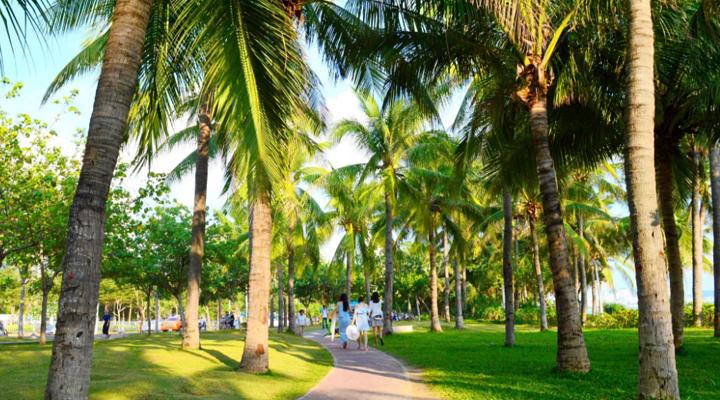 椰梦长廊旅游图片