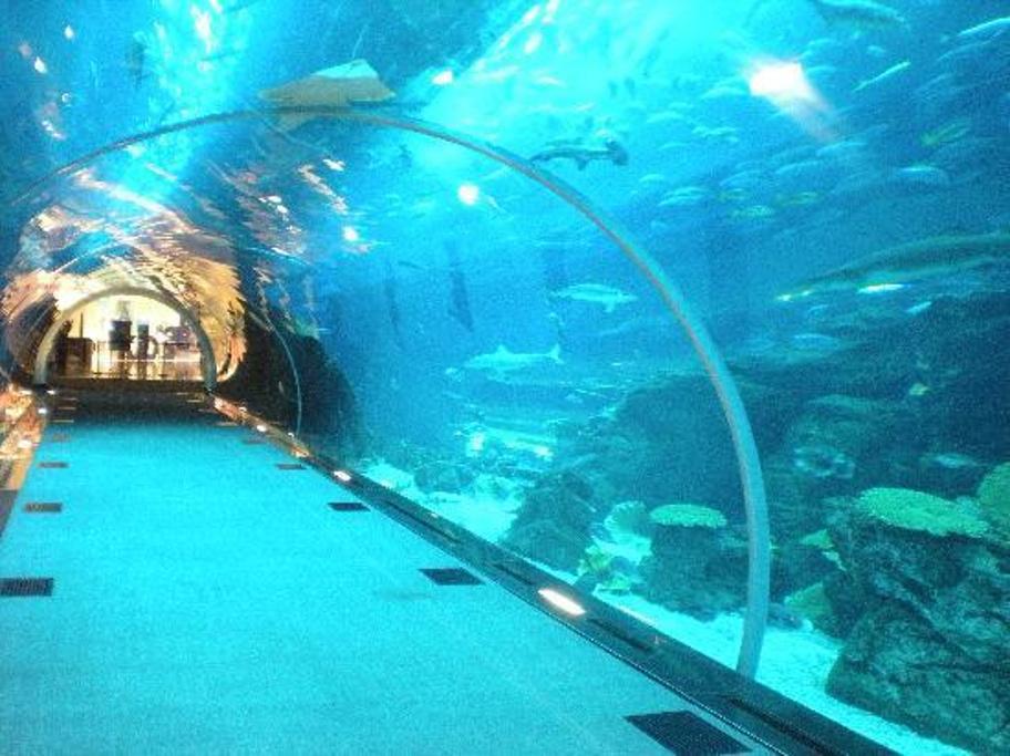 2015迪拜水族馆&海底世界动物园
