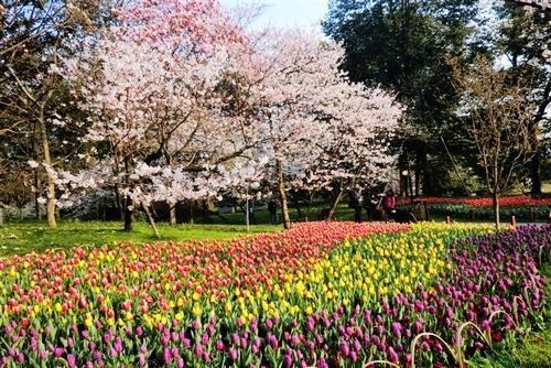 除了众多种类的植物,公园也放养了大量的野生动物