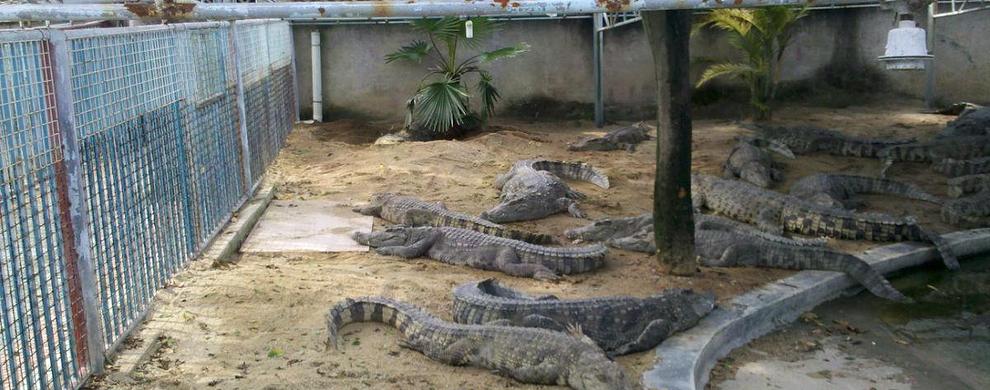 种类纷繁的鳄鱼园