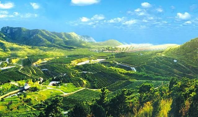 青岛华东葡萄酿酒有限公司创建于1985年,是中国第一家按照国际酒典标准生产单品种、产地、年份.全干型高级葡萄酒的企业。 华东葡萄酒庄园位于青岛崂山南龙口九龙坡,严格按照欧洲葡萄酒庄园模式建造的中国第一座欧式葡萄酒庄园,占地1000余亩,被誉为中国的鹰冠庄园。华东葡萄酒品质出众,一经问世便倍受关注。华东莎当妮、华东薏丝琳于1987年、89年、91年等数次在法国波尔多葡萄酒博览会获银奖;1989年、1998年多次在比利时布鲁塞尔国际品酒大赛中屡获金奖,并被佩戴金棕榈叶;此后在法国、意大利、香港等国际大赛上屡
