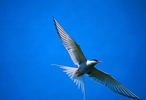 厦门海洋珍稀物种自然保护区