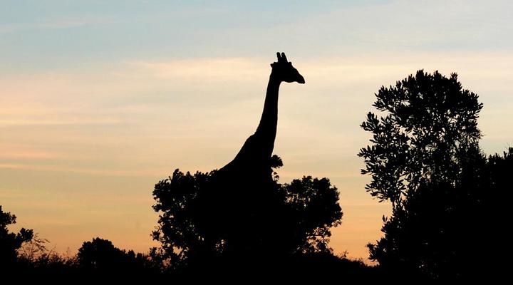 马赛马拉国家公园旅游图片