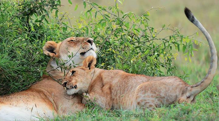 肯尼亚旅游景点图片