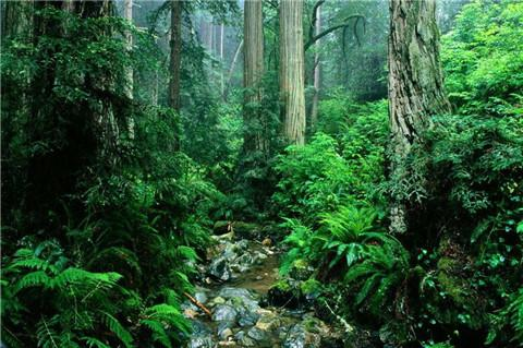 原始森林公园图片