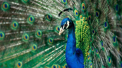 洱海公园动物园