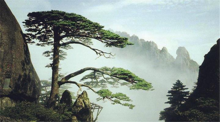 黄山の画像 p1_38