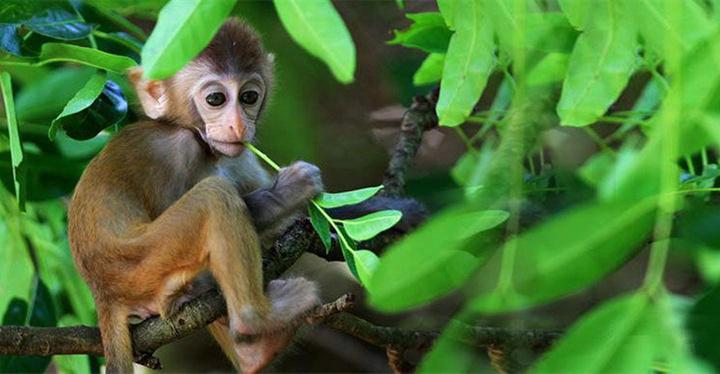 南湾猴岛旅游图片