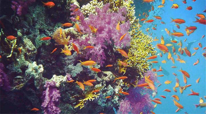 最美珊瑚礁旅游图片